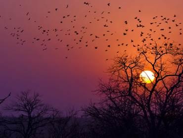 Natureza Africa