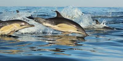 pousada-sagres-observacao-golfinhos
