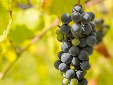 Ruta de los Vinos Verdes