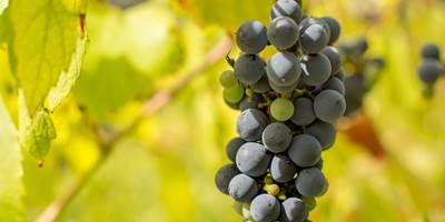 Vinhos Verdes Route